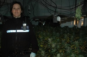 PC Louise Anzani with some of the cannabis plants found at an address in Ystrad Mynach.