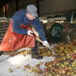 Blaengawney Cider has been given a business grant