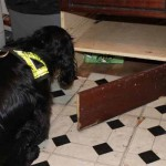 SNIFFED OUT: Trading Standards often use specially trained dogs to sniff out fake tobacco goods