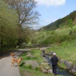 END OF THE ROAD?: A visitor enjoys Cwmcarn Forest Drive. Picture by Joy Saphine