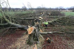 Officers from Natural Resources Wales discovered the remains of over 200 illegal felled trees in Blackwood in January 2017