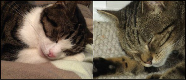 The RSPCA is concerned after two cats were poisoned in Senghenydd