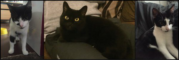 Three cats have died after being poisoned in Risca