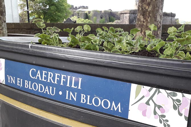 A Caerphilly in Bloom planter with the castle in the background