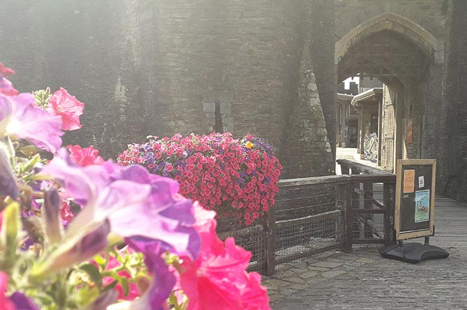 Flower displays at Caerphilly Castle