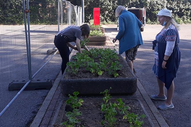 Volunteers planting flowers for Caerphilly's Wales in Bloom entry