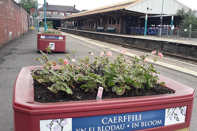 Planters at Caerphilly railway station
