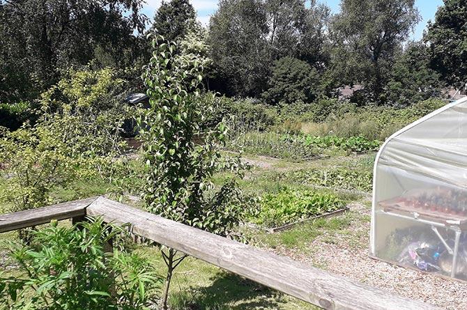 Morgan Jones Park Community Allotments
