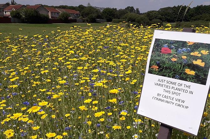 Flowers near Castle View lake