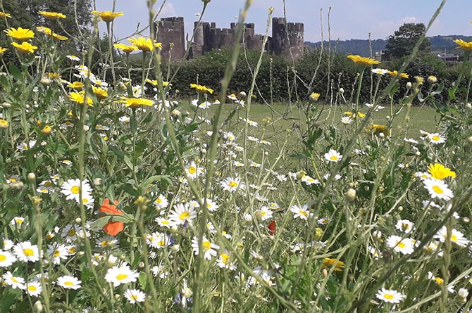 Caerphilly town has won a first place prize at Wales in Bloom 2021